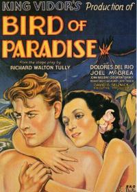 bird_of_paradise-1932